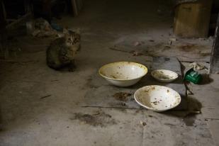 Кошки на третьем этаже говорят о том, что этот этаж, возможно, обитаем... Фото Екатерины Фроловой.